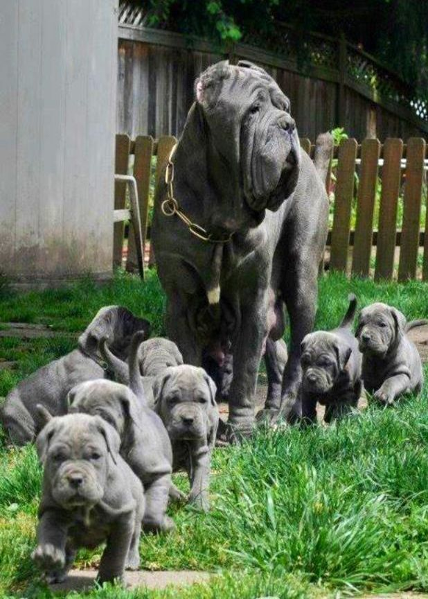 Community Post 14 Animals Demonstrating Why A Mother S Love Is So Special Animals Cute Animals Mastiff Puppies