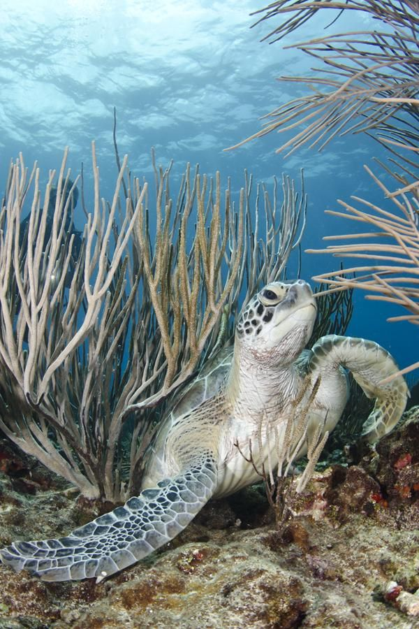 Best Caribbean Snorkeling Spots: Tanya's Top 10 | Puerto rico island