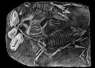 Image result for Burial of Horse Skeletons in Heroon at Lefkandi