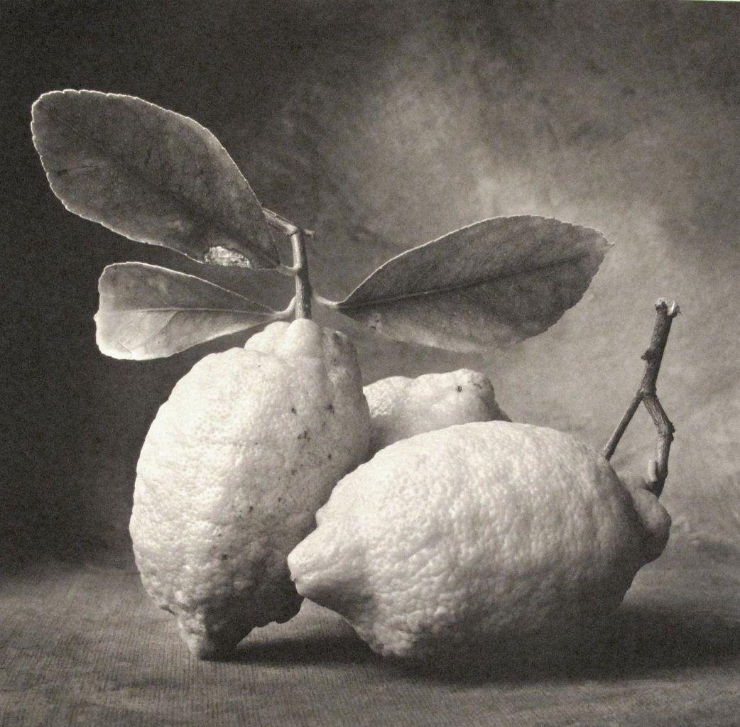 Lemons a beautiful portrait verve gallery santa fe