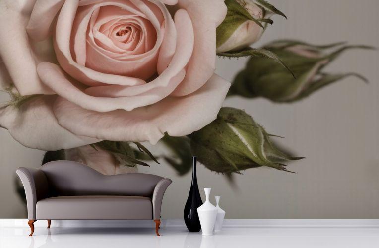 Elegant Pink Rose Wall Mural Rose wall, Rose wallpaper