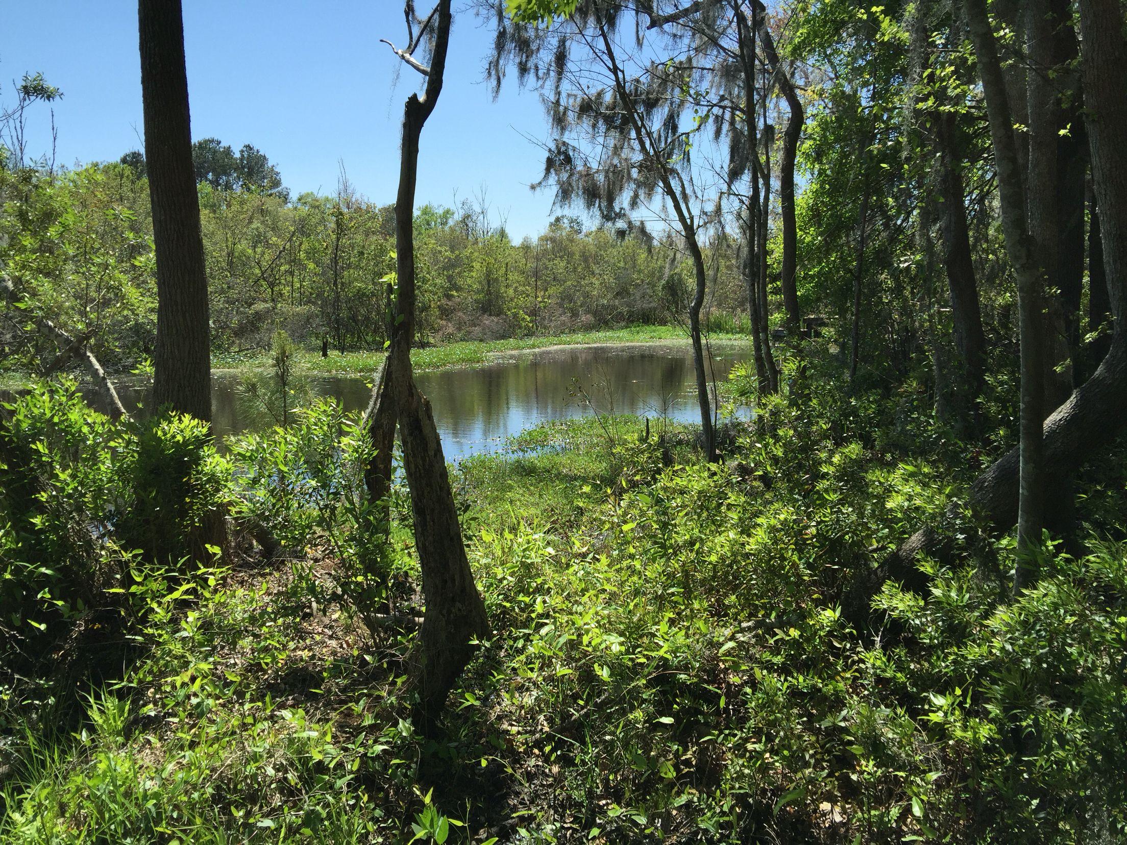 goose creek reservoir my backyard hanahan south carolina