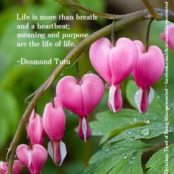 Desmond Tutu Bleeding Heart Flower Flowers Flower Heart