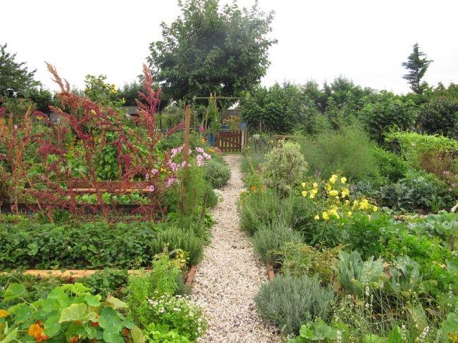 Jardin de curé | Fleurs & plantes // Flowers & plants | Pinterest ...
