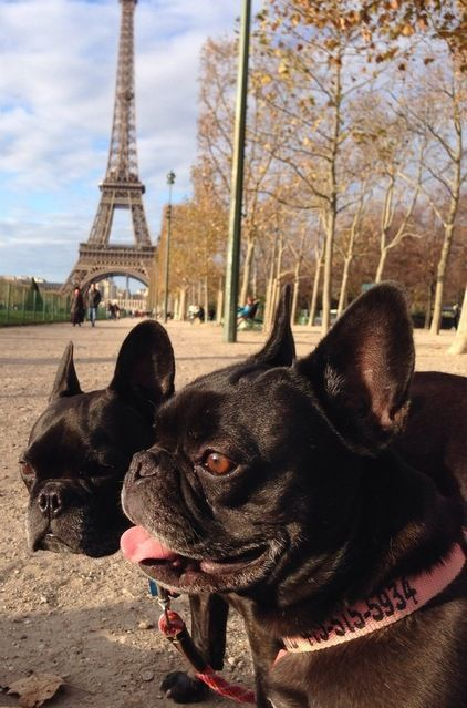 Pippa And Petit Go To Paris Dogs Dog Love Animals