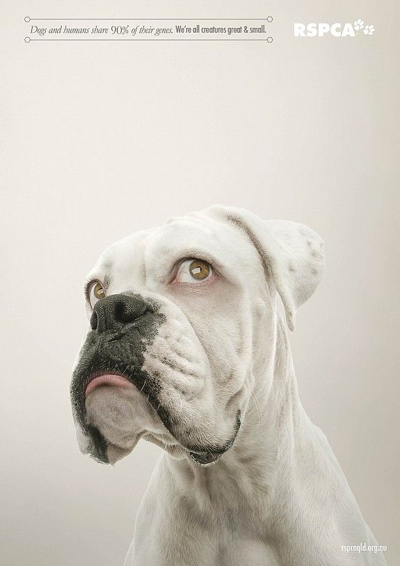 Rspca Advertising Dogs Humans Share 90 Of Their Genes We Are All Creatures Great And Small Boxer Dogs Animals Cute Animals