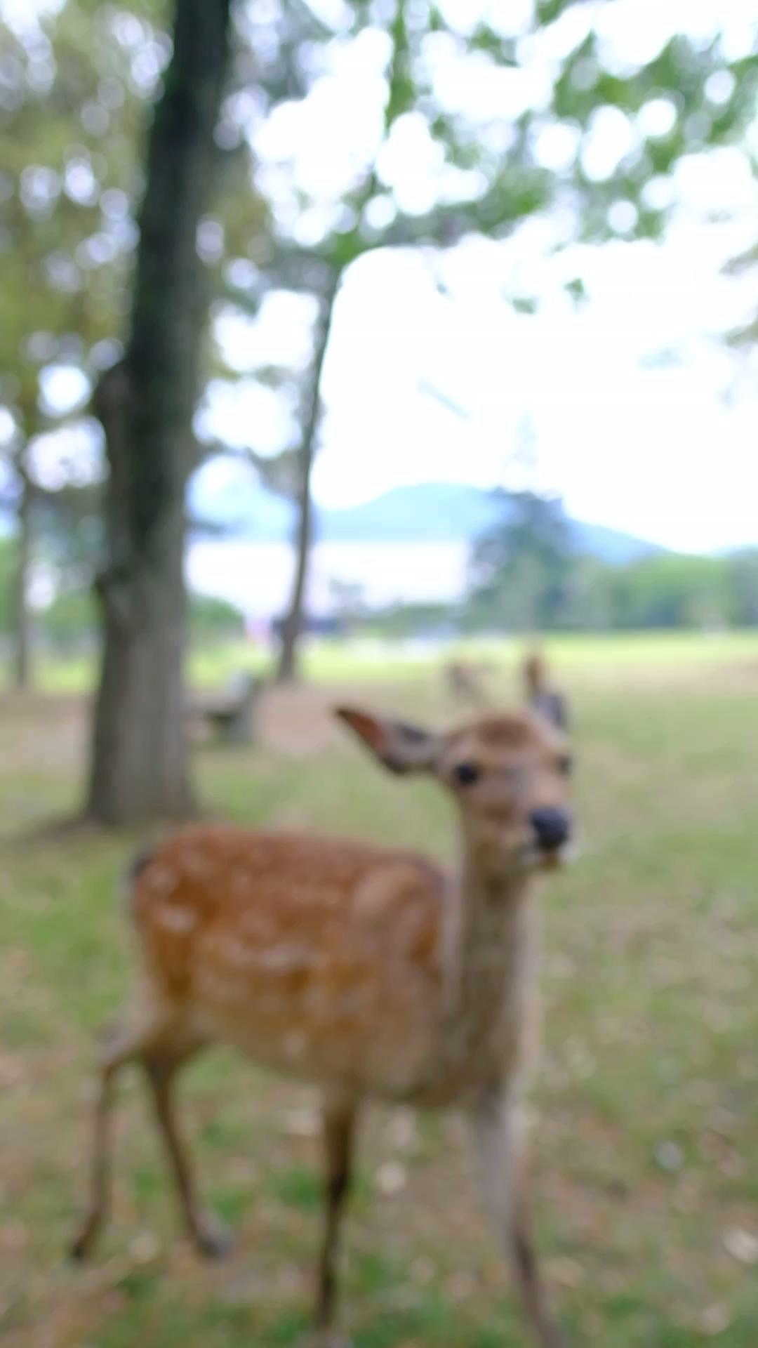 Things to do in Nara / Nara Travel Guide / Travel in Japan / Nara to Kyoto / Japan Travel #Japan #Travel #Nara #Kyoto