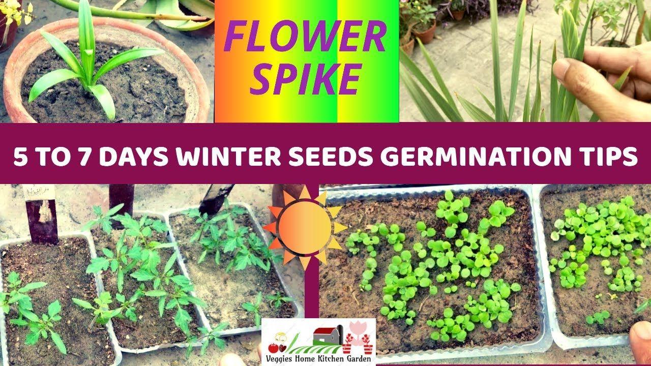 Pin By Asim Nawaz On Gardening Seed Germination Vegetable Seed Germination