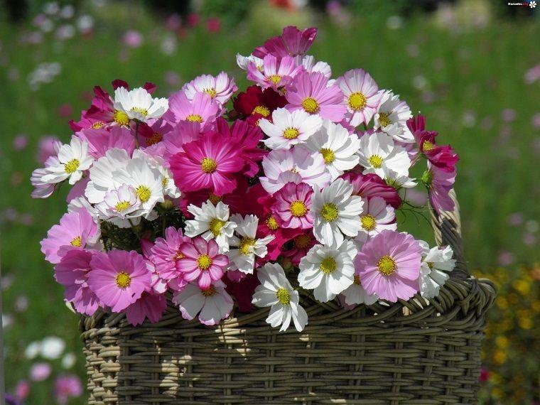flores - Fotos De Flores Preciosas