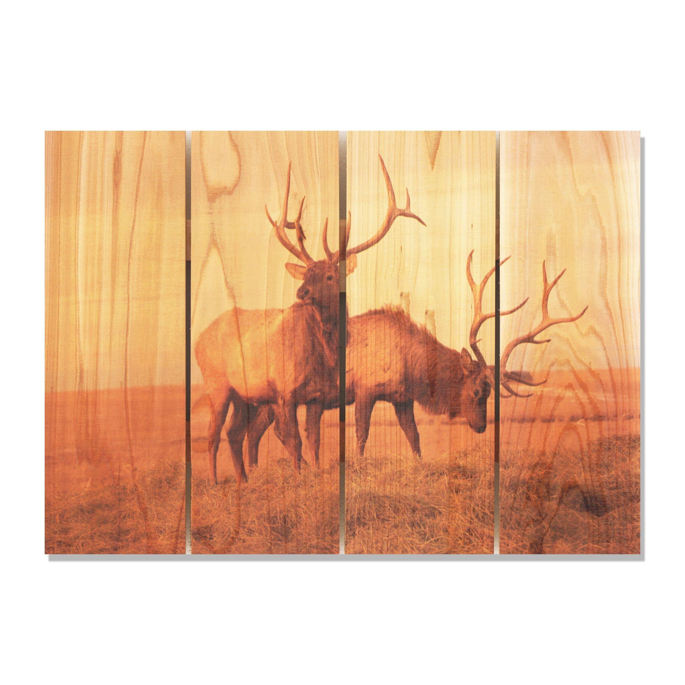 Bull Elk 22.5x16 Indoor/ Outdoor Full Color Wall Art | Wall ...