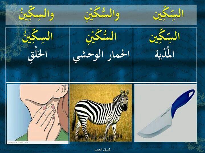 فوائد لغوية معاني كلمة السكين في اللغة العربية Arabic Language Arabic Langauge Learn Arabic Language