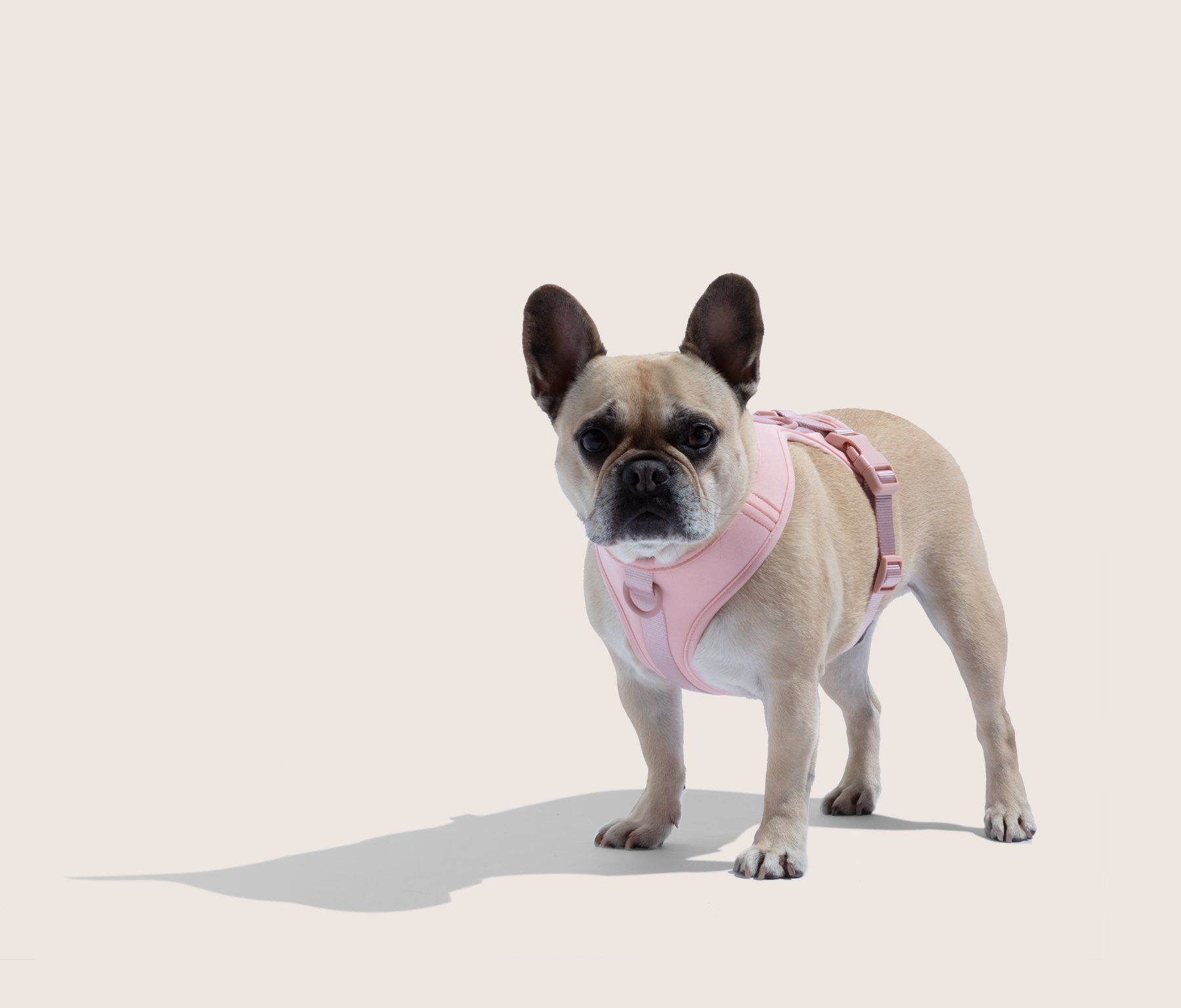 Harness Puppy Collars Dog Harness Dog Walking