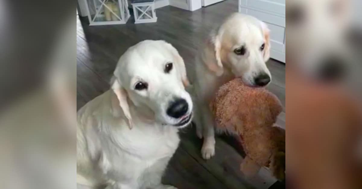 Mum Told Labs Not To Fight Over Food Then Grabs Her Camera