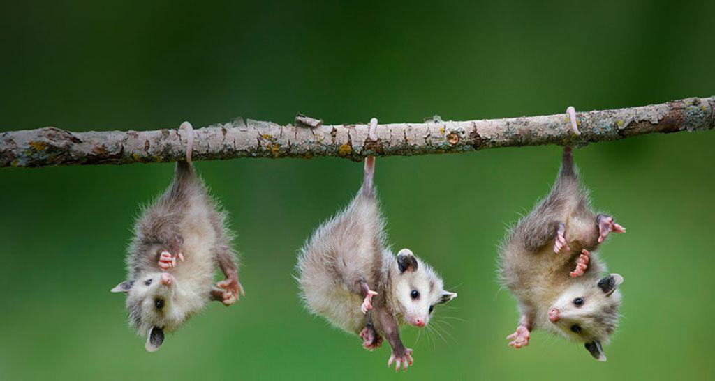 Смешные и забавные животные | Самые милые животные, Милые ...