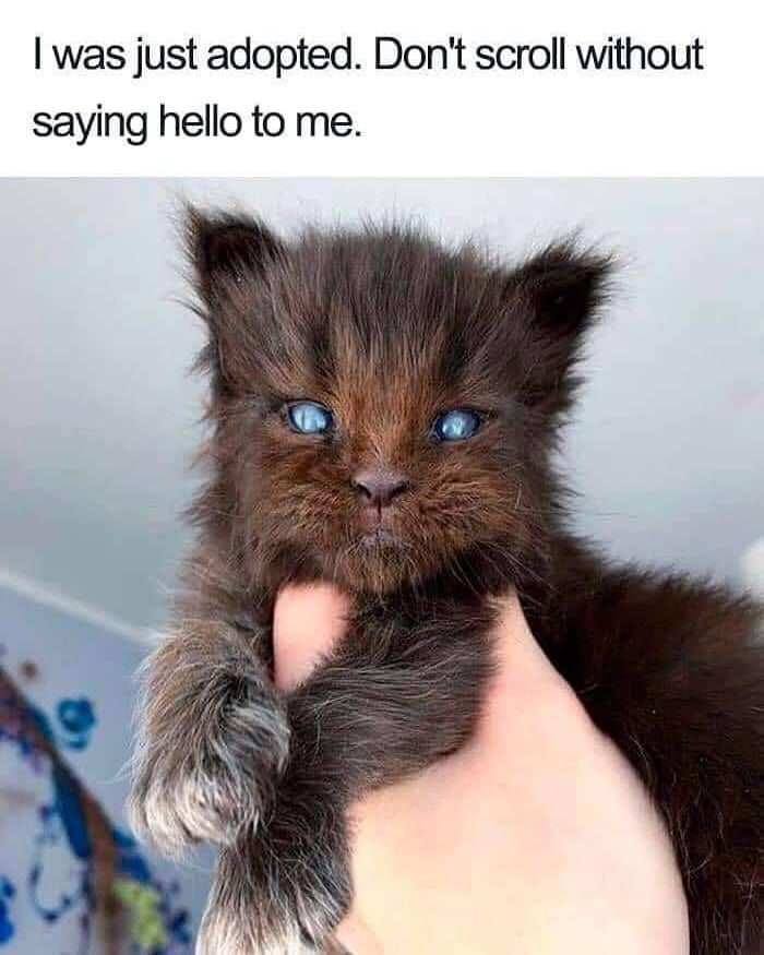 """Catastic on Instagram """"Hello . catmemes """