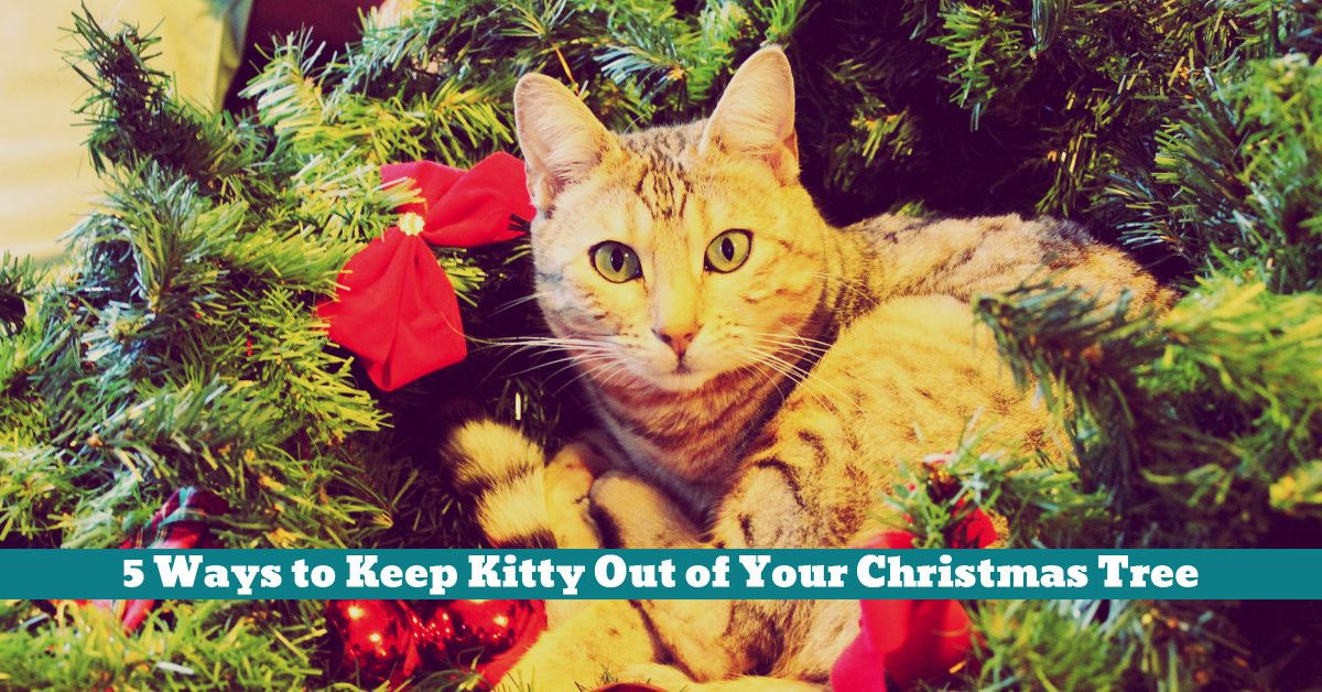 5 Ways to Keep Kitty Out of Your Christmas Tree | Kittens at ...