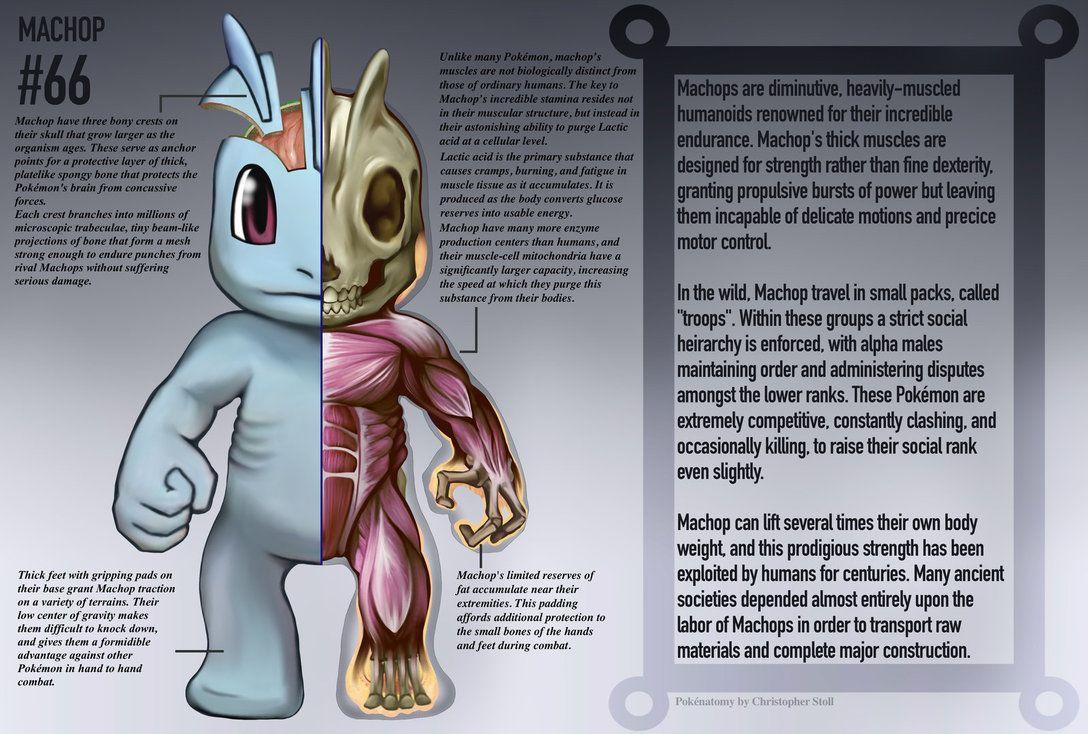 Machop Anatomy- Pokedex Entry by Christopher-Stoll | Pokemon ...