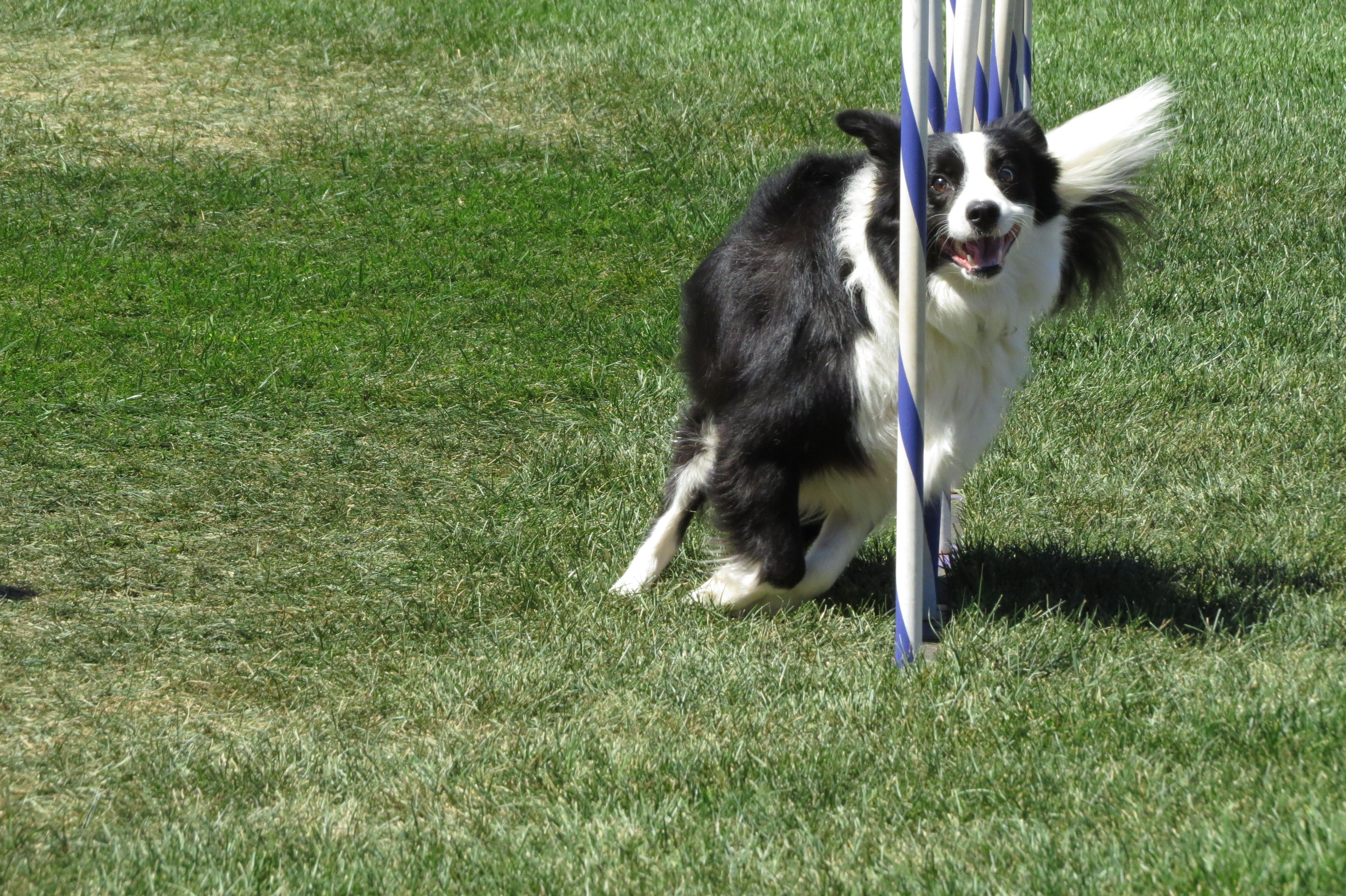 Border Collie Dog Breed Information Border Collie Dog Breeds