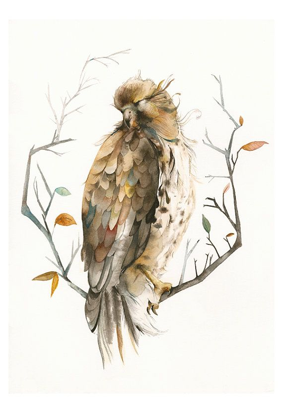 Hawk painting watercolor - photo#38