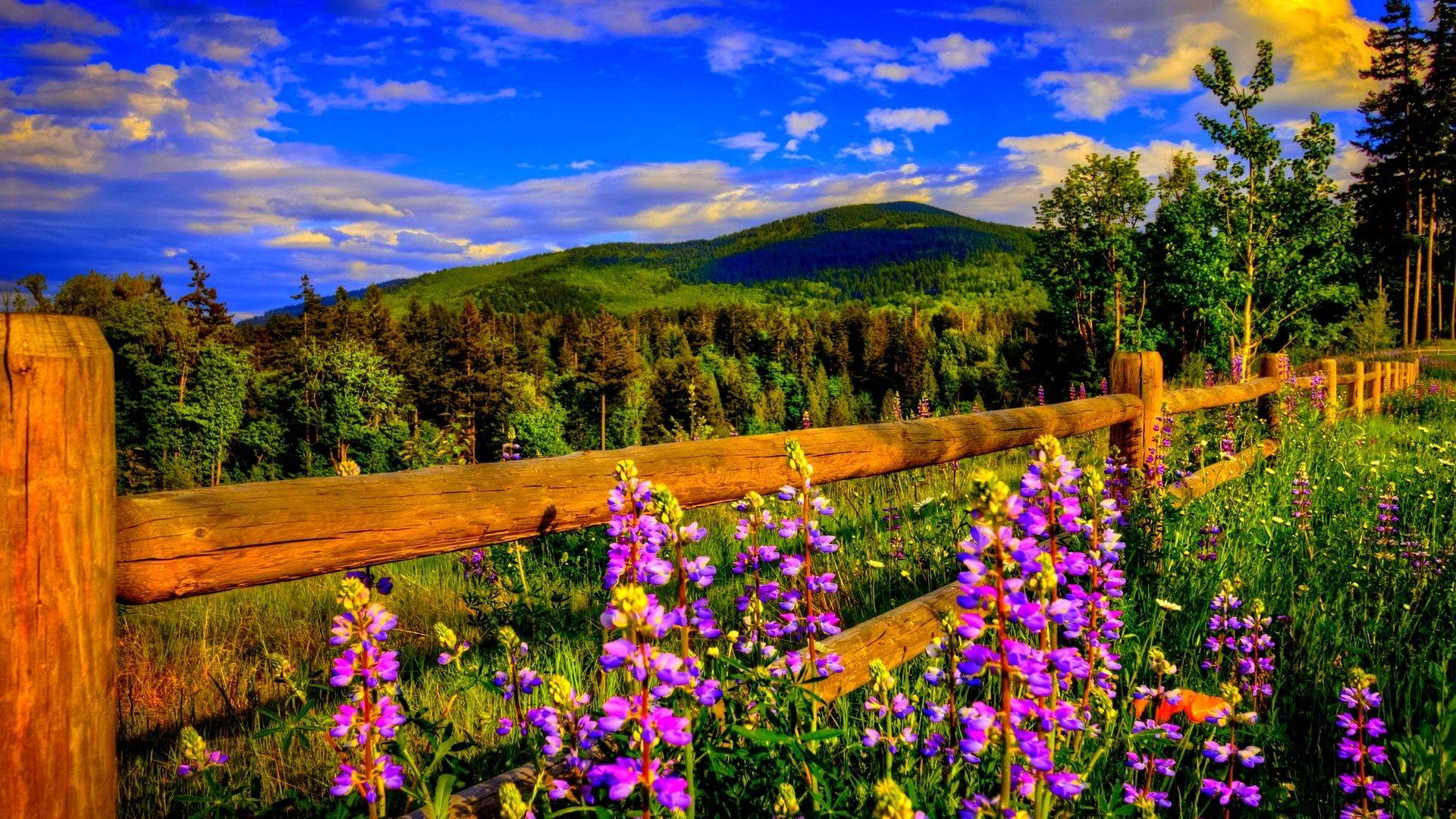 Spring Hd Backgrounds 2021 Live Wallpaper Hd Spring Background Spring Pictures Colorful Landscape