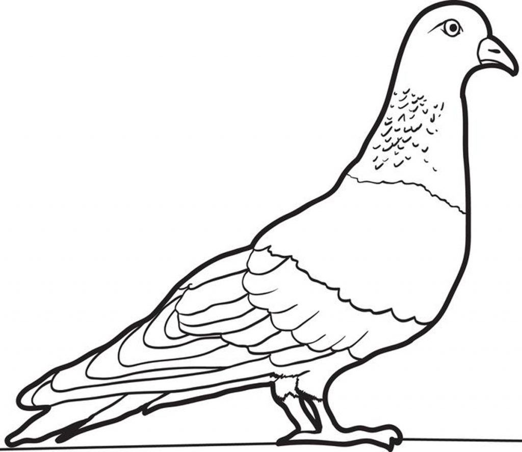Free Printable Pigeon Coloring Pages For Kids Coloring Pages Animal Coloring Pages Bird Coloring Pages