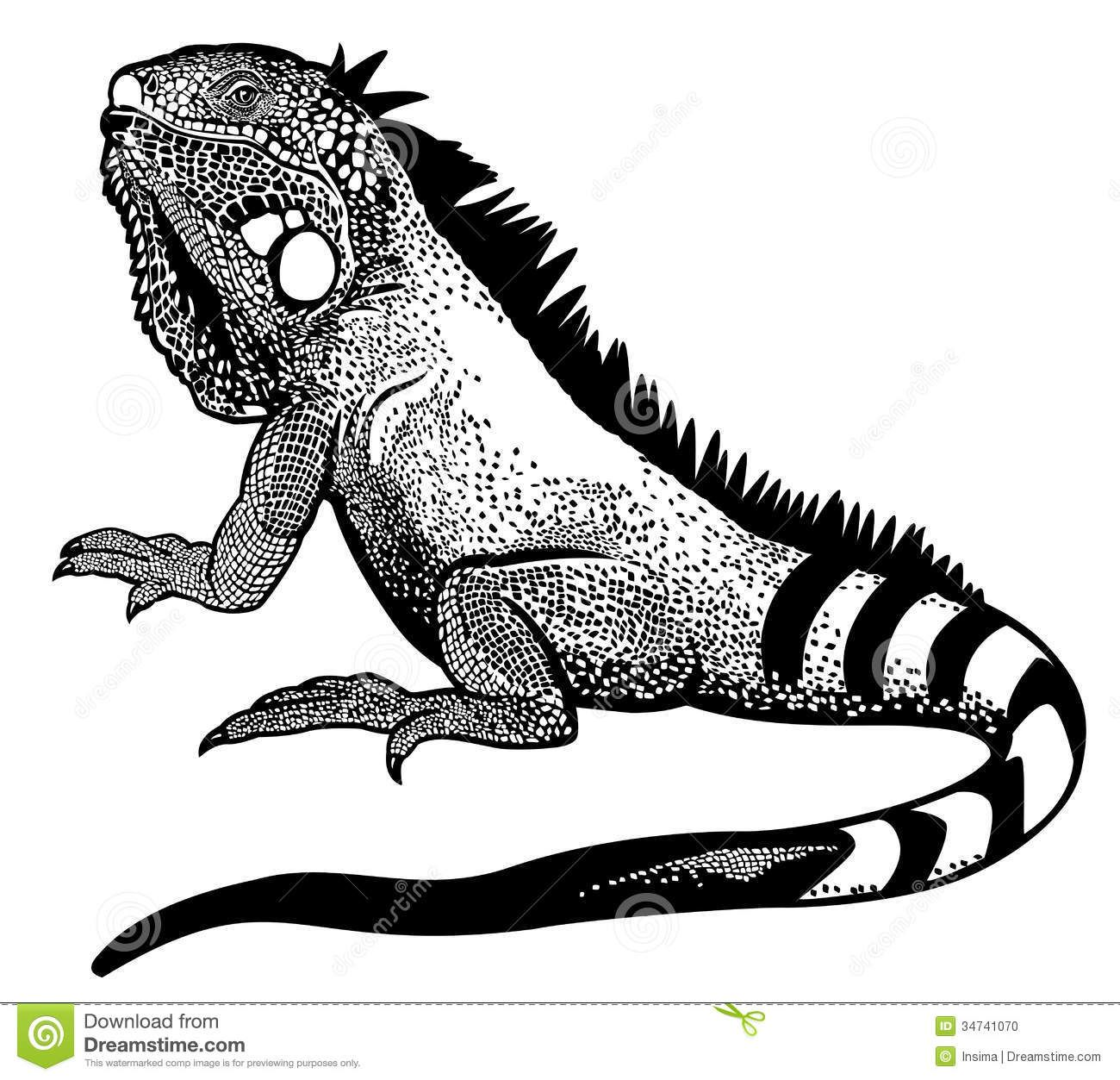 Iguana Clipart Google Search Black And White Illustration Green Iguana Lizard
