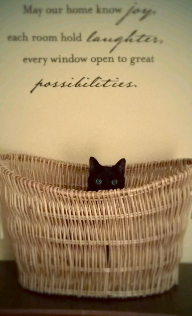 Black Cat Inspirational Quotes New Home This Is Marlowe Our Black Cat With Images Wicker Laundry Basket Animal Rescue Black Cat