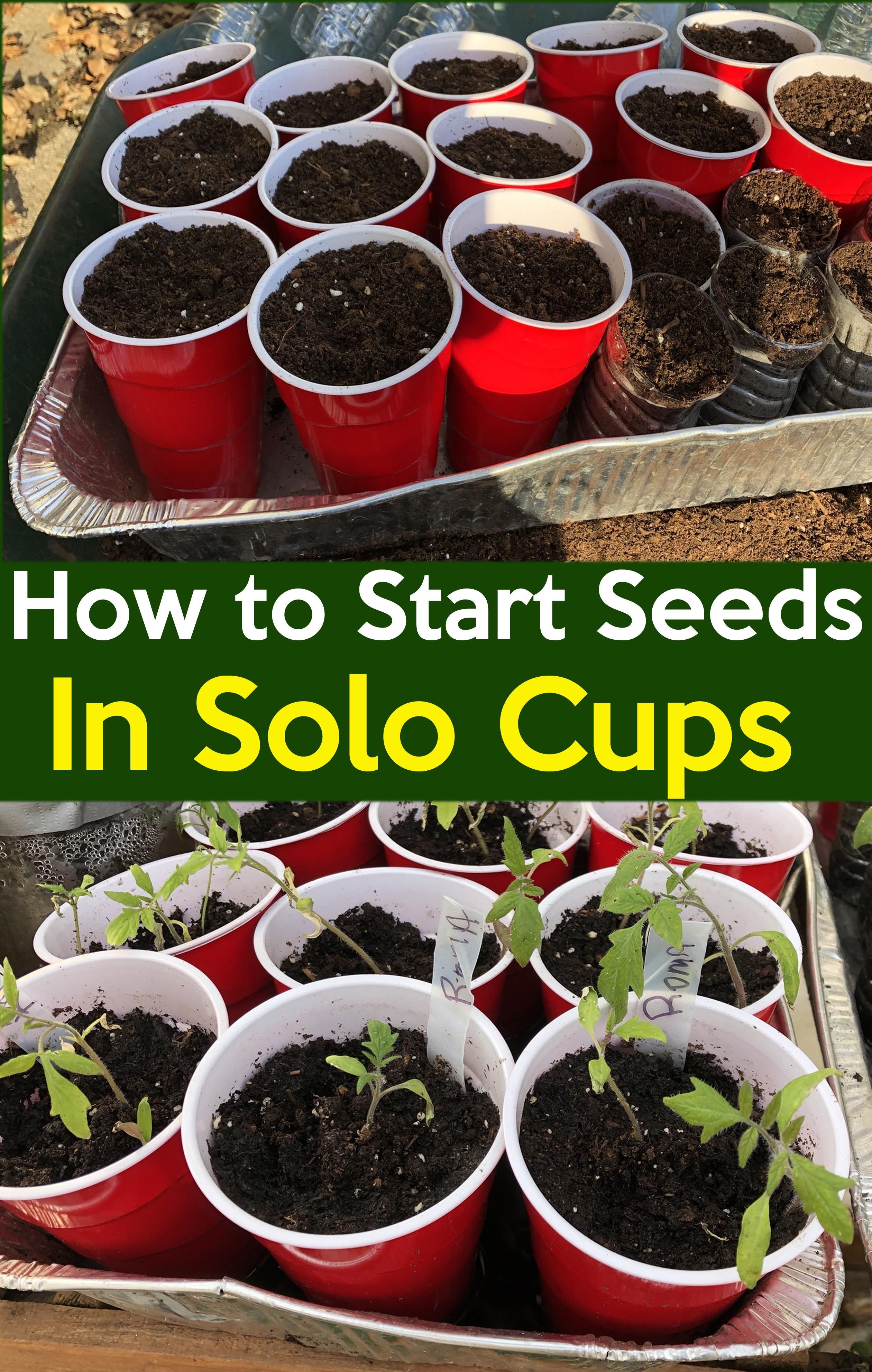 Cheap And Easy Seed Starting How To Start Seeds In Red Solo Cups
