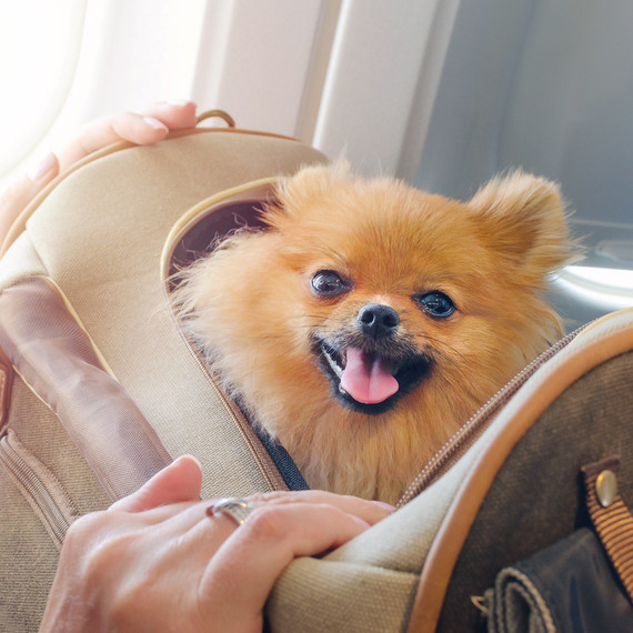 Flying on a Plane with Your Pet? Here's What You Should