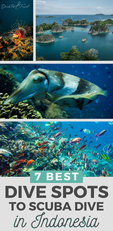 7 Best Dive Spots To Scuba Dive In Indonesia Drink Tea Travel Outdoor Travel Adventure Southeast Asia Travel Indonesia Travel