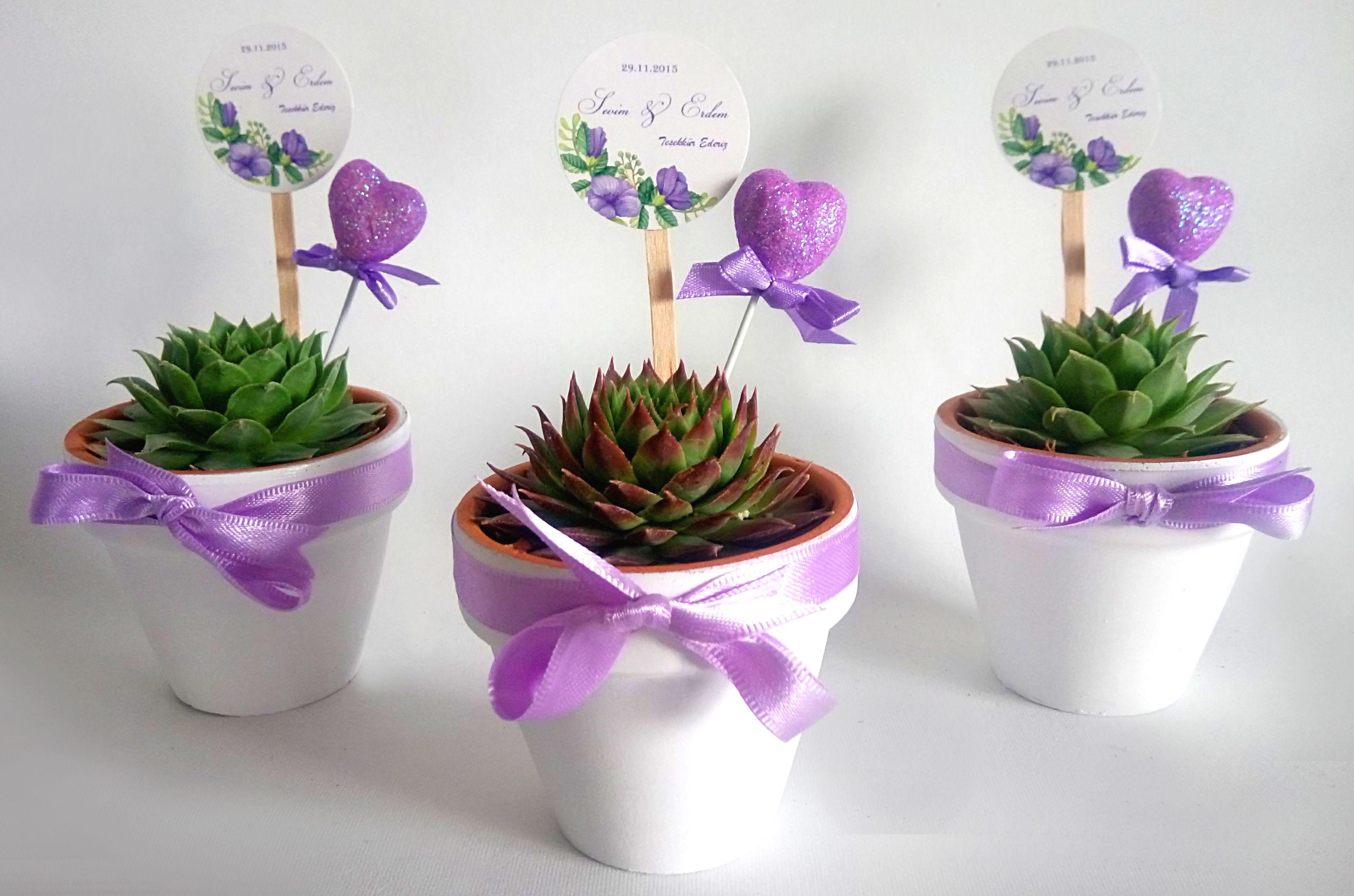 www.trendipot.com/ nikah şekeri nikah hediyesi succulent sukulent ...