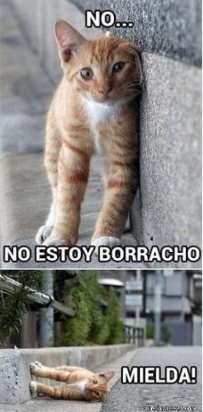 No No Estoy Bodacho Gatitos Divertidos Meme Gato Gatos Graciosos