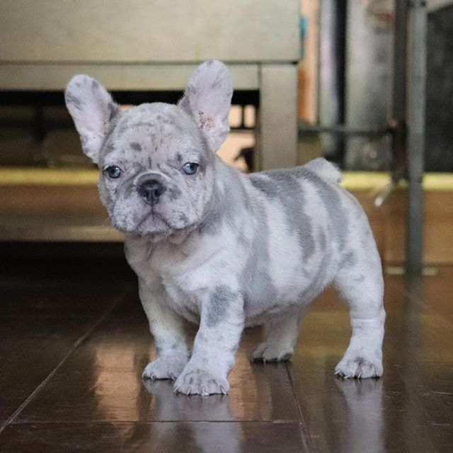 What Special Markings Cute Puppy Cute Baby Animals