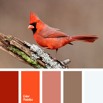 Contrasting Palettes   Page 30 of 94   Color Palette Ideas