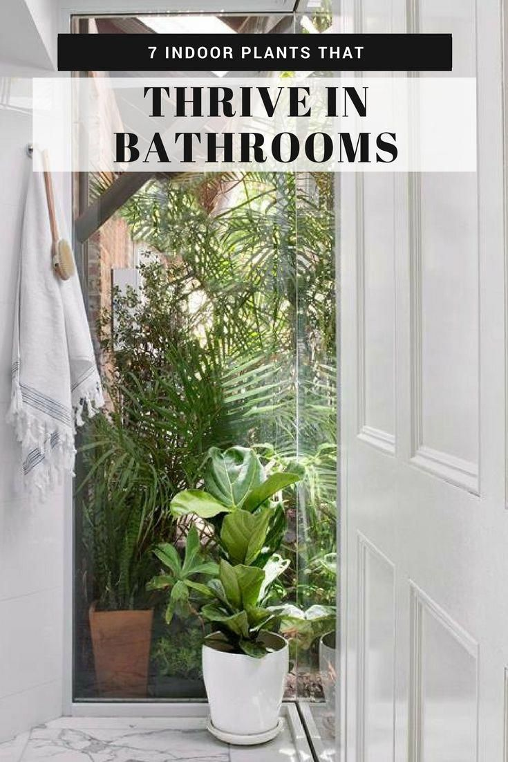 Bring Your Bathroom To Life With Indoor Plants There S A Range Of House Plants That Are Suitable For Bathrooms Hanging Plants Indoor Plants Big Indoor Plants