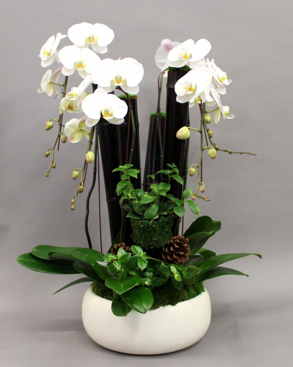 Decadent Orchid Planting By Anthony S Flowers In Brentwood Orchids Orchid Plants Plants