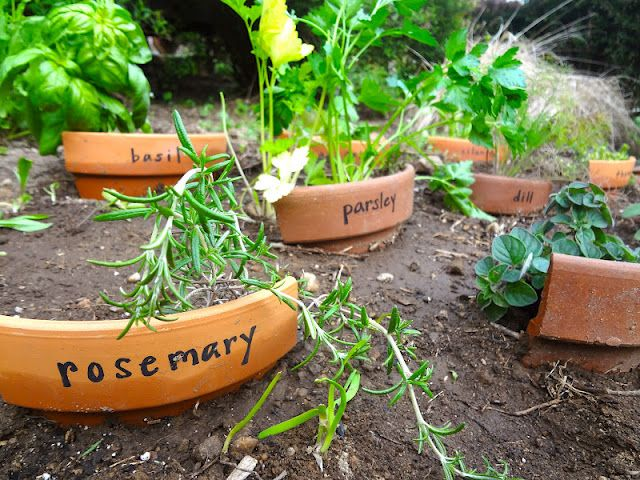 Cracked terra cota planters as herb markers.