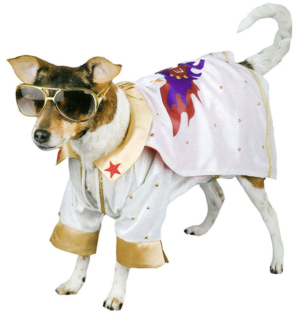 Vegas Inspired Elvis Dog Costume See More Http Www