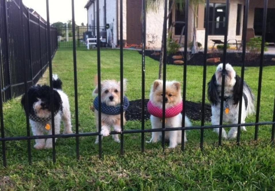 Puppy Bumpers® Keep Your Dog on the Safe Side of the Fence Black with White Paw