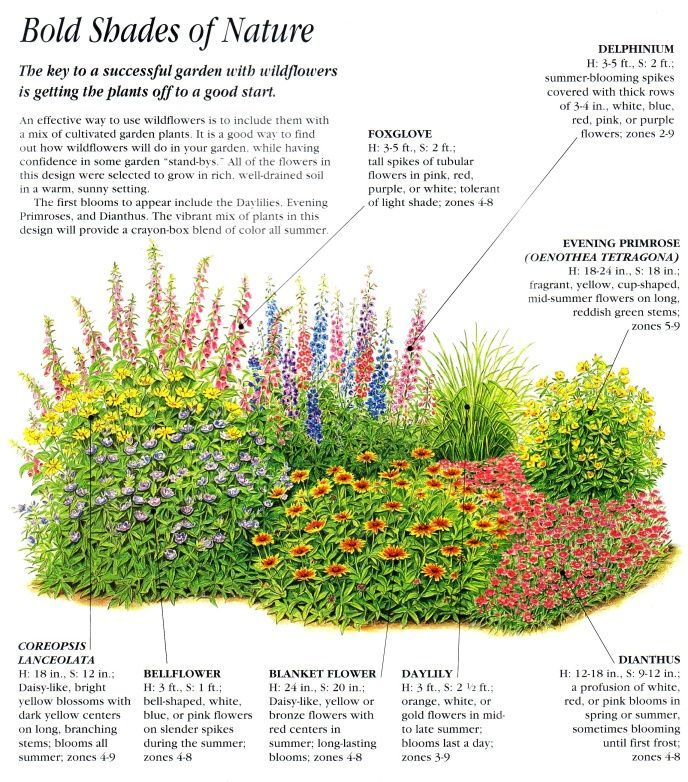 Garden Layouts And Planting Schemas Plants Wildflower Garden Flower Beds