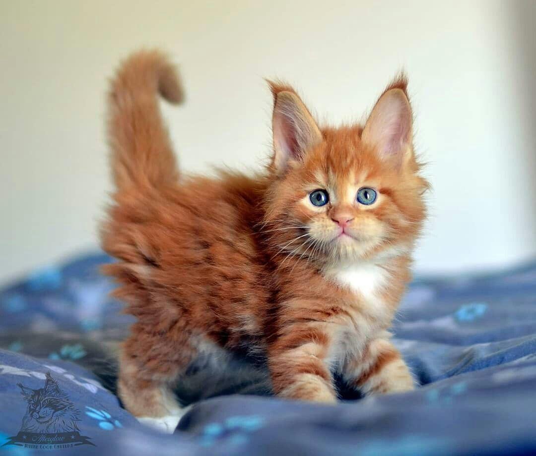 Funny Little Girl Neytiri 5 5 Week Old Kittens Cutest Cute