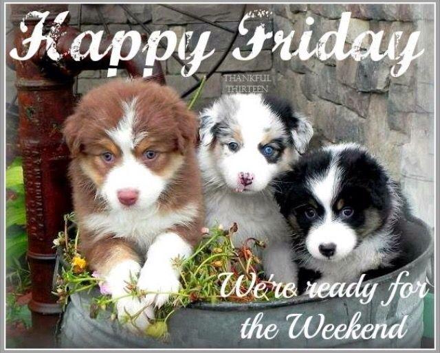 Reunited Lostdogs 6 1 15 Bentcreek Ne Bichons M F 402 669 2607 Https Www Facebook Com Lostpetsofomahaarea Posts 49015 Losing A Dog Bichon Frise Bichon