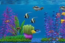 Résultat De Recherche Dimages Pour Fond Décran Aquarium