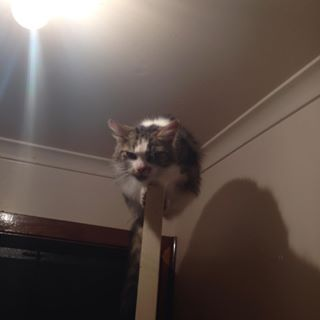 """""""The view from up here is marvelous…for killing."""" 