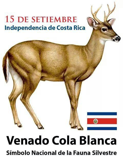 Results for Imagenes De Venados Cola Blanca Animados