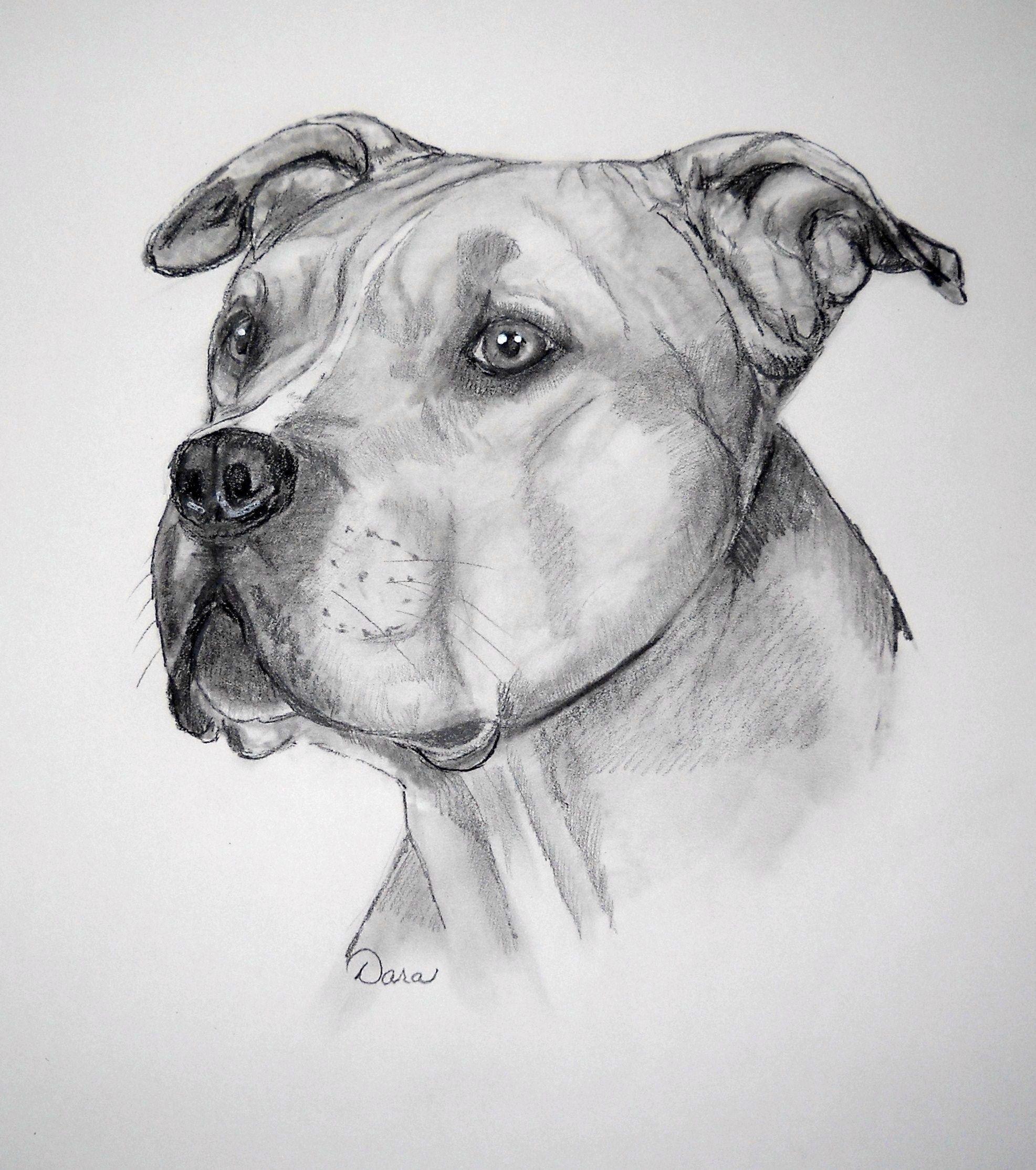 American Pitbull Terrier With Images Pitbull Art Bull Terrier