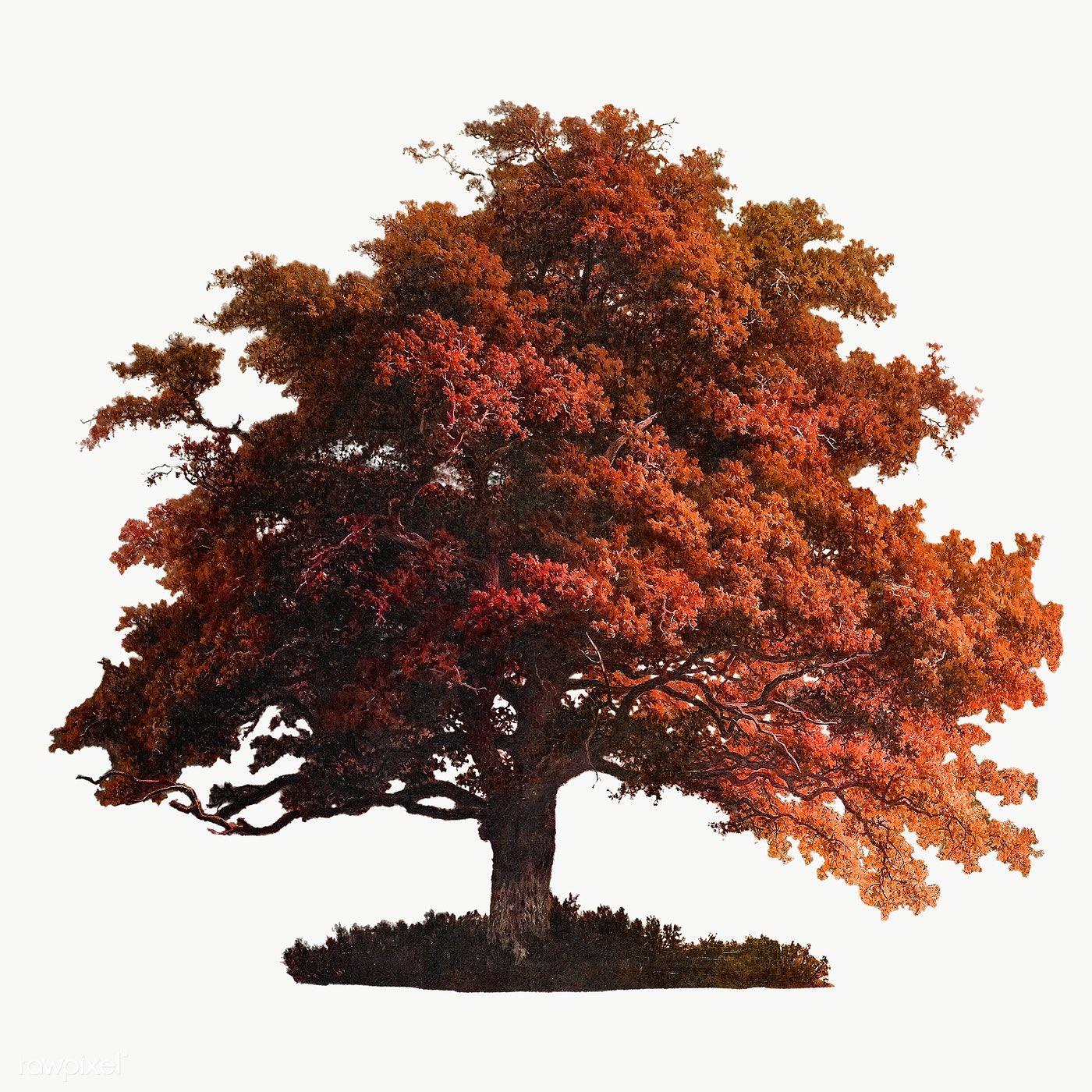 Fall Tree Clipart Autumn Tree Transparent Background 835236 Autumn Trees Deciduous Trees Tree Clipart