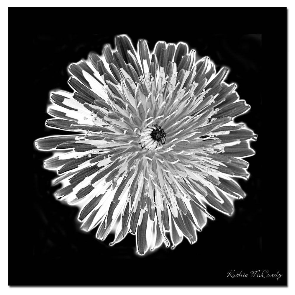 Dandelion Black & White Giclee Print