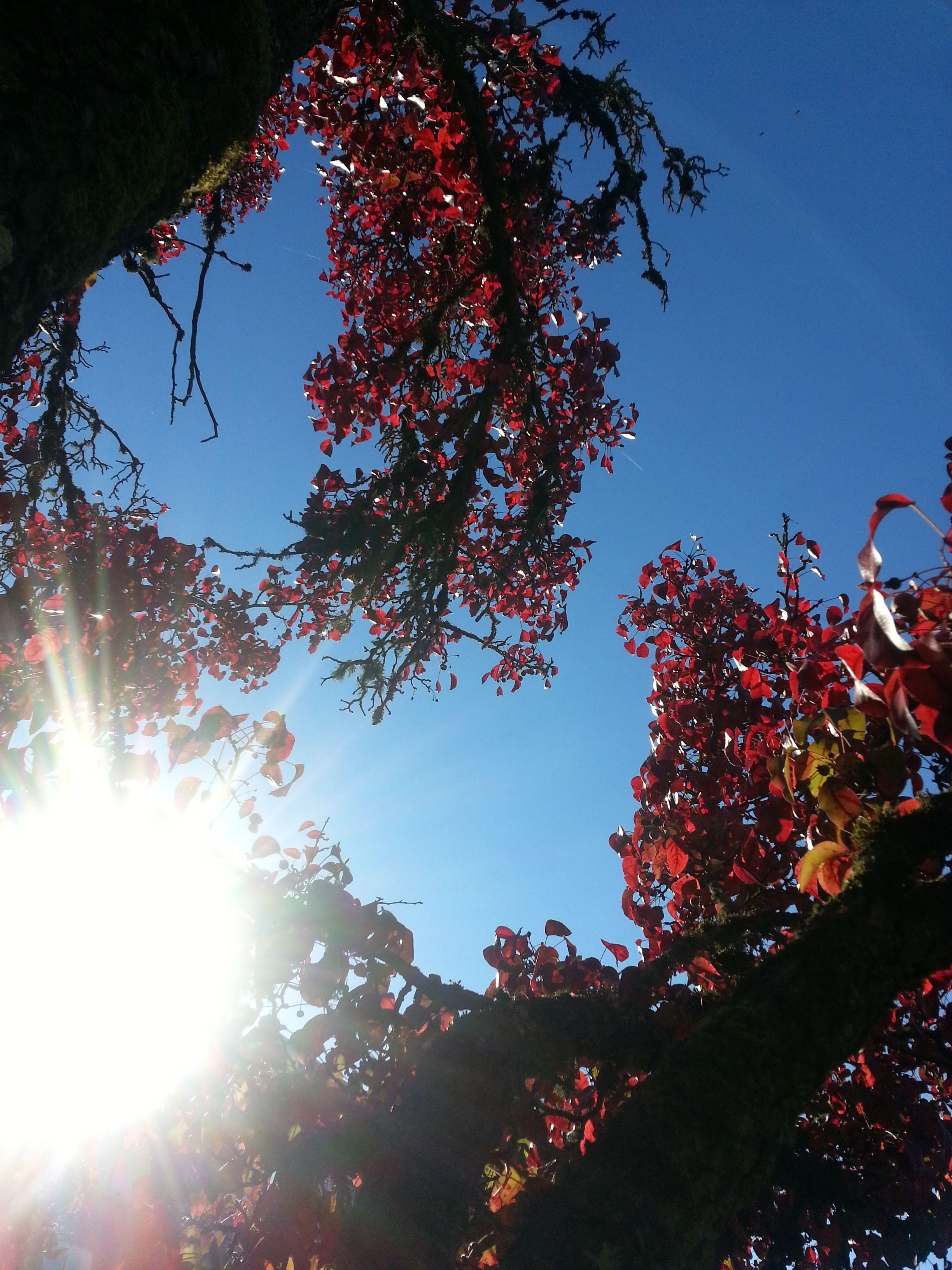...as plants take live from light and nurture for it, so should we... como las plantas toman vida de la luz y se alimentan de ello, nosotros tambien podriamos hacerlo...