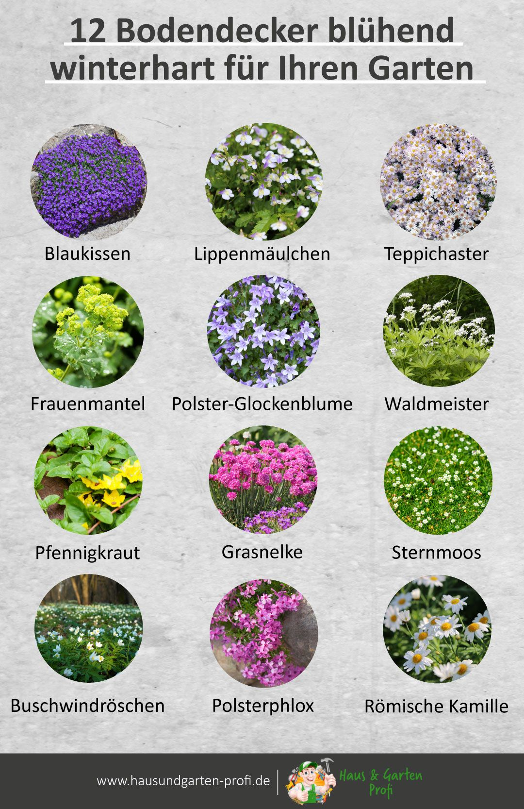 12 Bodendecker blühend winterhart für Ihren Garten